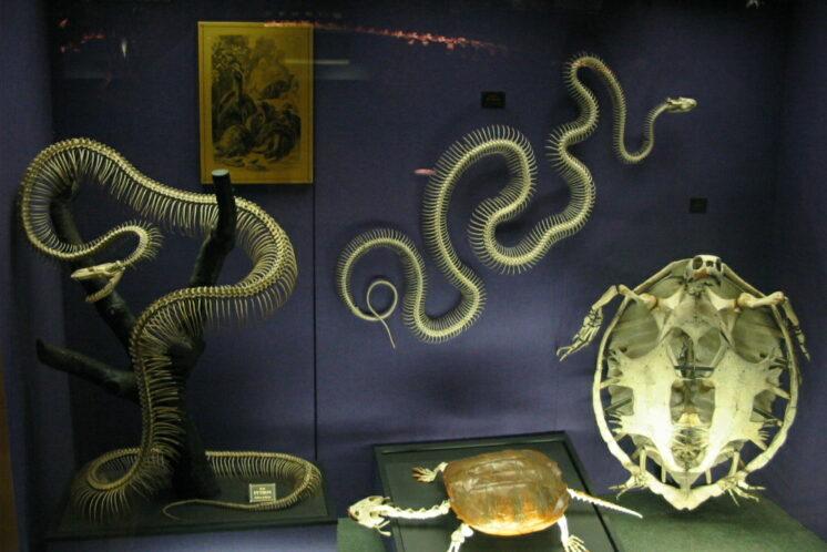 Snake_Skeletons