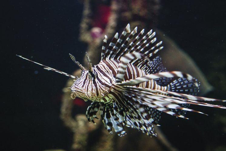 sea-life-2-1.jpg
